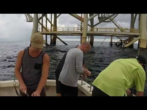 Fishing The Gulf Of Mexico for Red Snapper, Shark, King Mackerel, and Blue Fish