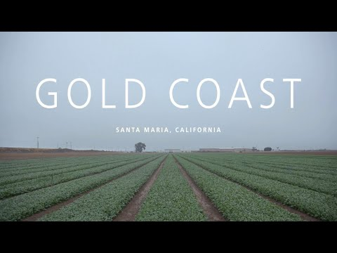 Alltech Crop Science Improves Yield And Quality At Gold Coast Farms