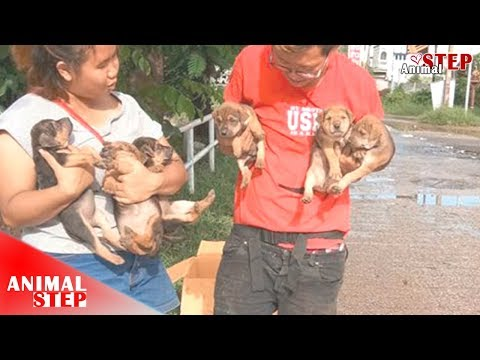 Rescued Stray Puppies Who Sheltered Under The Bridge