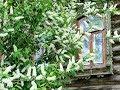 Под окном черёмуха колышется Поёт Уральский Русский народный хор а капелла mp3