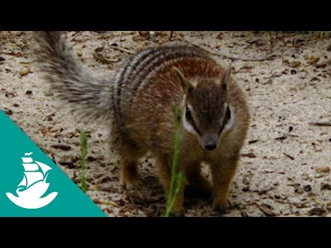 ...And The Mammals Laid Eggs - Now in High Quality! (Full Documentary)
