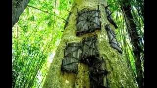 Misteri Pohon Tara Makam Bayi Di Tanah Toraja