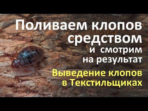 Видео: Выведение клопов из квартиры с первого раза: как это было в Текстильщиках в Москве