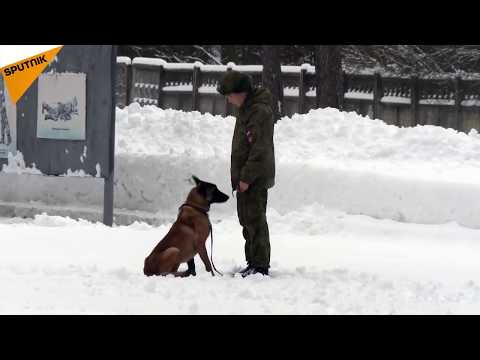 MoD Posts Video With Cute Puppies to Wish Russians Happy New Year
