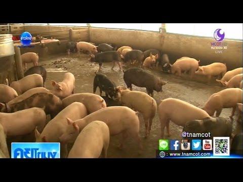 เกษตรสร้างชาติ : ฟาร์มเลี้ยงสุกรแบบไร้ความเสี่ยง