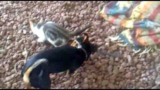 dog and cat sexing.mp4