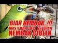 Biar Nembak Masteran Pleci Nembak Ciblek Ngebren Durasi Panjang  Mp3 - Mp4 Download