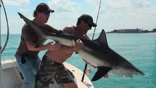 Tiger Shark, Cobia, Snook, Manatees and Spinner Sharks!!! AFUNDAY!!