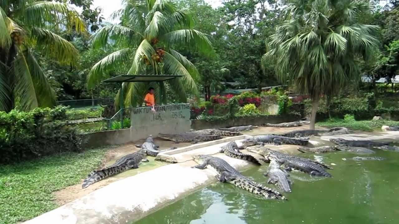 Картинки по запросу Крокодиловая ферма малайзия