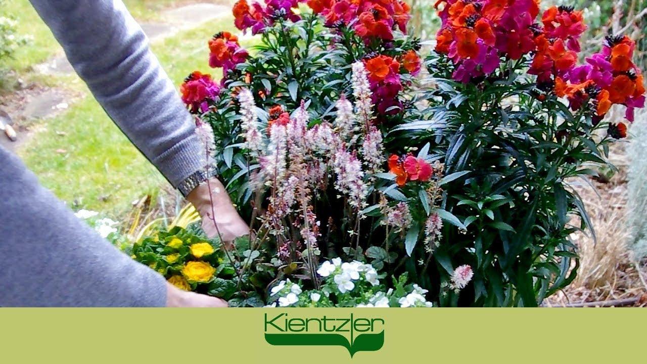 frühlingsflirt - frühlingsblumen pflanzen auf balkon, terrasse und