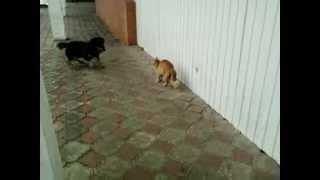Как мы спасли кота от пса-придурка