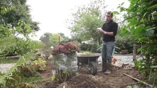 HHB planter un hortensia dans un parterre