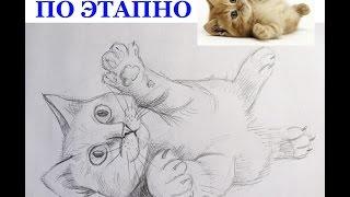 Как нарисовать котенка по шагам. How to draw a cat on steps