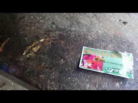 Лечение пчел от клеща полосками Акарасан