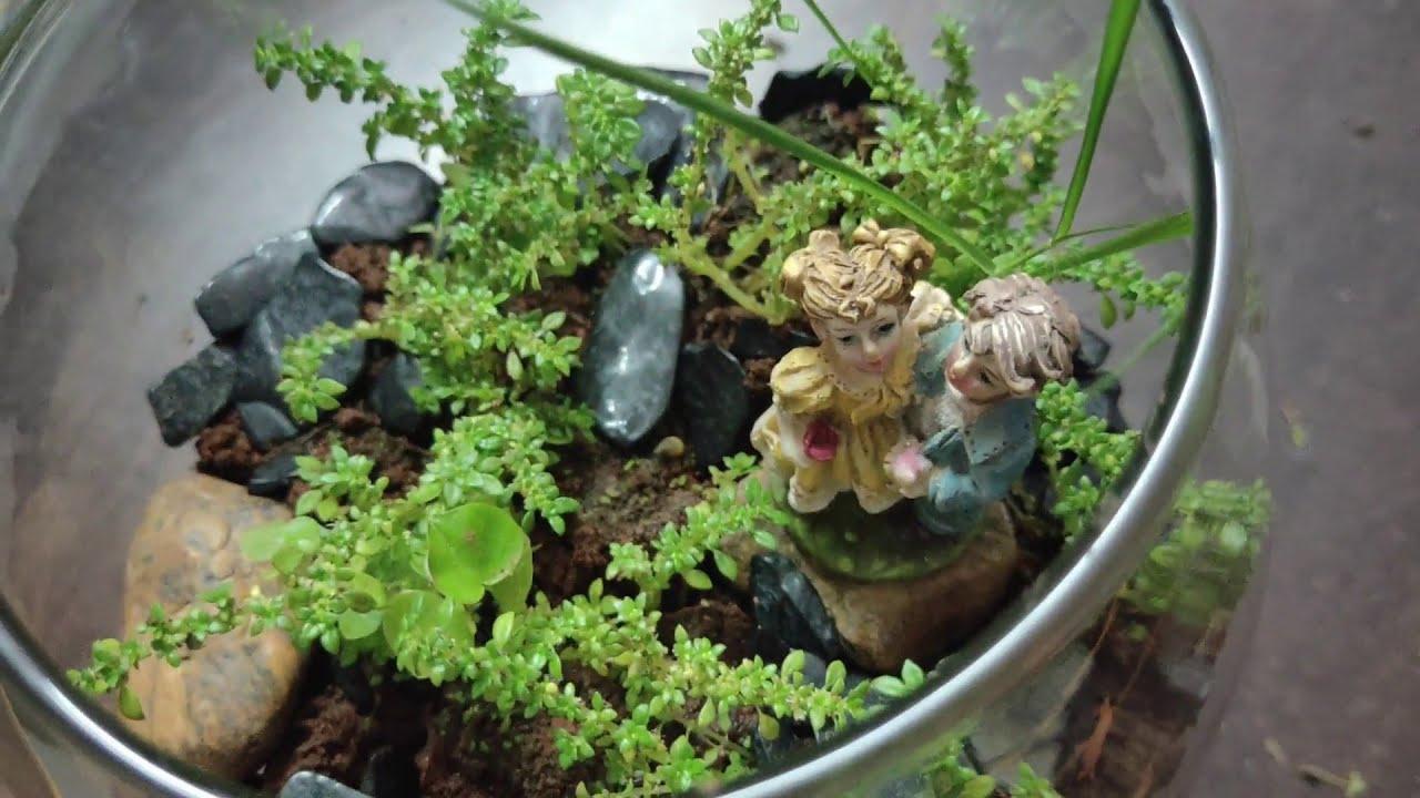 How To Setup A Terrarium Indoor Garden Ideas Diy Gardening Tamil Youtube