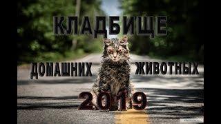 Кладбище домашних животных / Фильм ужасов 2019