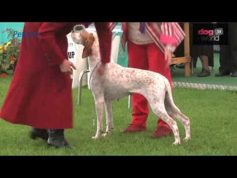 Darlington Dog Show 2015 - Gundog FULL