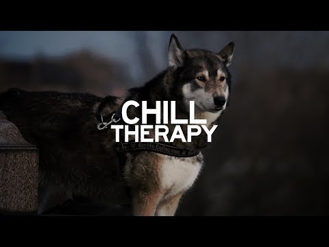 SKOTT - Wolf (with Lyrics)
