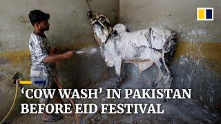 Pakistanis take livestock to 'cow wash' ahead of Muslim festival of sacrifice, Eid ul-Adha