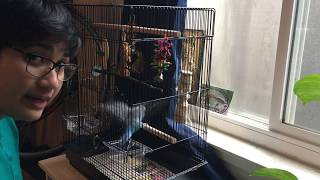 How to start clicker training your parakeet | Charging the clicker