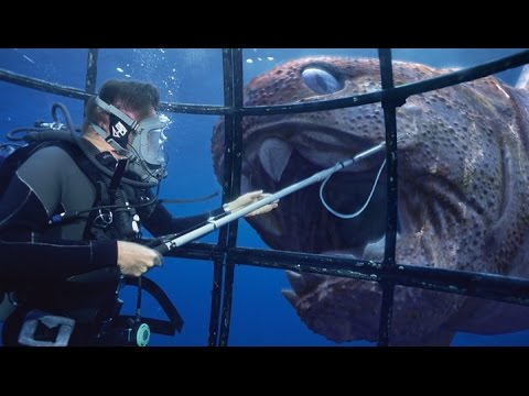 10 Most Terrifying Deadliest Predators The World Have Ever