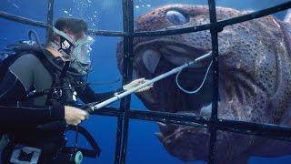 10 Most Terrifying Deadliest Predators the World Have Ever Seen