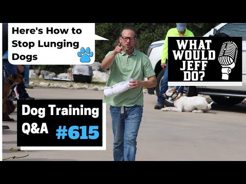 Dog Training  How to Stop Lunging Dogs  E Collar Training  What Would Jeff Do? Q&A  Ep.615 (2019)