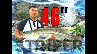 BROKE MY PERSONAL BEST: STRIPER FISHING AT OLD HICKORY DAM. TOPWATER HMONG FISHING