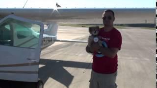 Pomrescue.com Rescued Pomeranian Sammy: Flying Home!