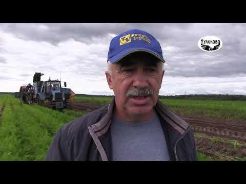 Вопрос: Когда в России по регионам начинается уборка овощей на огороде в 2020 г?