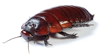 1 million cockroaches escape from farm in China; Man wakes up with cockroach in ear - Compilation