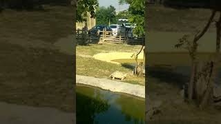 Dubai safari zoo Turtle sex live OMG 🤔 watching this video