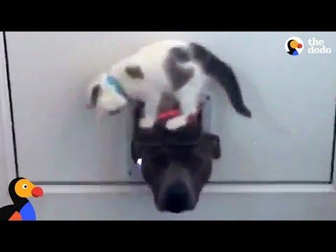 Kitten Won't Let Dog Through Door   The Dodo
