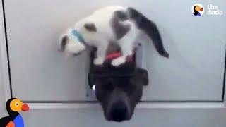 Kitten Won't Let Dog Through Door | The Dodo