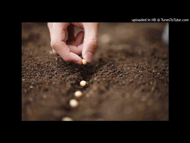 50 Comece semear uma semente de Gratidão