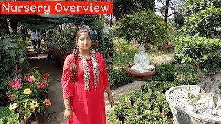 Dehradun Nursery Overview,Nursery visit/Nursery visit with me/आइए नर्सरी की सैर करें🌿🌴🍀🌺🌷🌸🌼