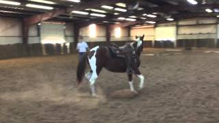 You Bet Your Roses - 2014 APHA mare for sale.