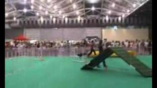 Skc Jumpers & Agility Trials 4th Nov 2007