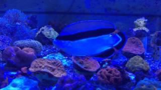 Reef Tank Addiction (the Fish Tank Song)
