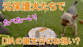 2018年5月30日 Dai薫は1歳になりました。腕白なDiaですが、Daiの社交的...