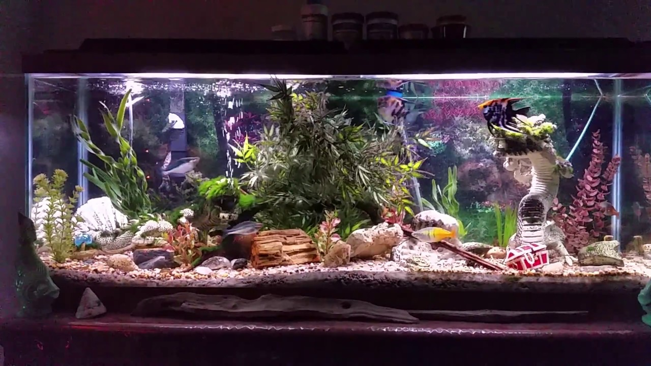 50 gallon freshwater tropical community tank with for 50 gallon fish tank