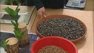 화훼장식  수경식물만들기 2010 05 17