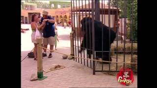 Best Of Just For Laughs Gags   Funniest Gorilla and Mouse Pranks