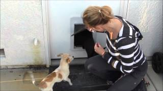 Episode #41 Training Tip Doggie Door 101