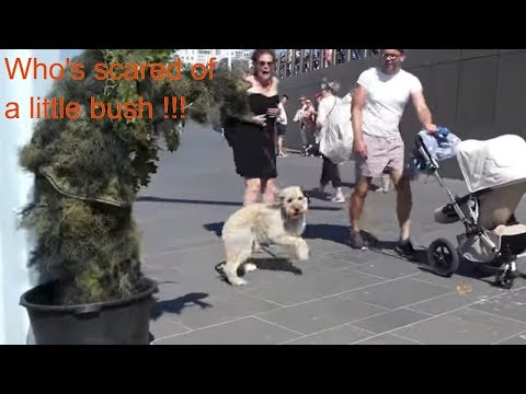 Bushman Scare Pranks! Epic Scares! compilation