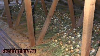 Как сушится чеснок и лук на чердаке