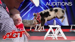 PIGS Got Talent?! Pork Chop Revue Brings Funny and Talented Pigs To AGT!  America's Got Talent 2020