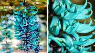 Most EXPENSIVE Plants in the World!