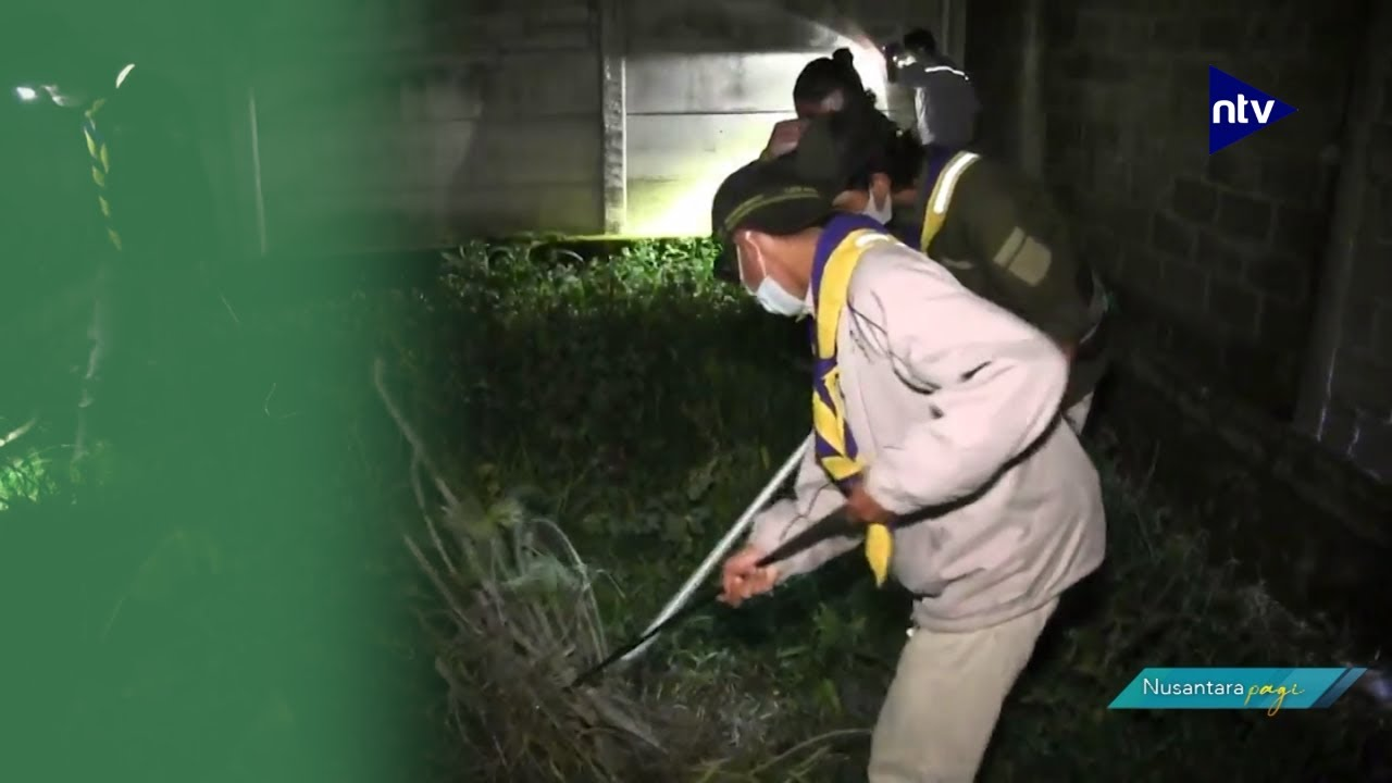 Teror Ular Kobra Kembali Hantui Warga Bekasi