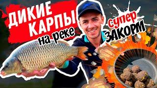 Рыбалка на фидер Дикий карп на реке Свислочь Тактика закорма Как ловить карпа на реке
